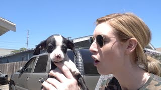 erin gets a puppy for her birthday!!!!! thats all that matters!!!!!!!!GET MERCH HERE ► https://carlyanderin.com/Subscribe for more Vlogs ► https://www.youtube.com/channel/UC8CB...Reggie has an instagram!:@ReggieTheWeenUber codes:CARLY: carlyi229euERIN: ering6049uefriends in vlog:Gabbie:https://www.youtube.com/user/TheGabbieShowTJIG: @tronstamosFOLLOW OUR IG:@carlyanderinPOBOX:Carly and ErinPO BOX 292265Los Angeles, CA 90029Erin Gilfoy:Instagram: eringilfoyTwitter: goddess_eriuSnapchat: erin_gilfoyFacebook: Erin GilfoyCarly Incontro:Instagram: carlyincontroTwitter: carlyincontroSnapchat: pooopflingerFacebook: Carly Incontro