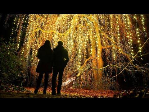 Lichter für die Weihnachtsstimmung im Botanischen Gar ...