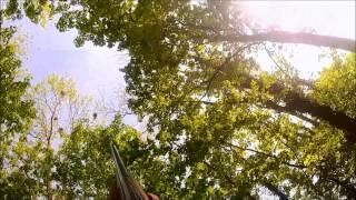 Chasse Aux Corbeaux (Destruction De Corbeaux Freux) Dans Les Vosges En Caméra Embarquée GOPRO