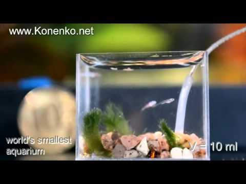 全世界最小的魚缸!
