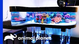 This Unique Tank Is The Size Of Grand Piano! | Tanked by Animal Planet
