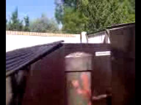 burger king employee dumpster dives