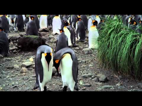 Adventures of the Penguin King International Trailer