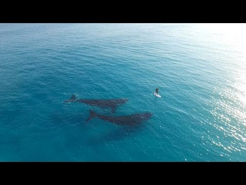 A drone filming 2 whales in Esperance Australia
