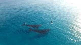 Esperance Australia  city photo : Paddle Boarding with Whales, Esperance Australia