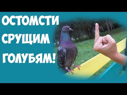 Отомсти срущим голубям!!!!