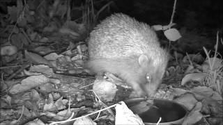 Wildlife Trail Camera - 30.10.2016