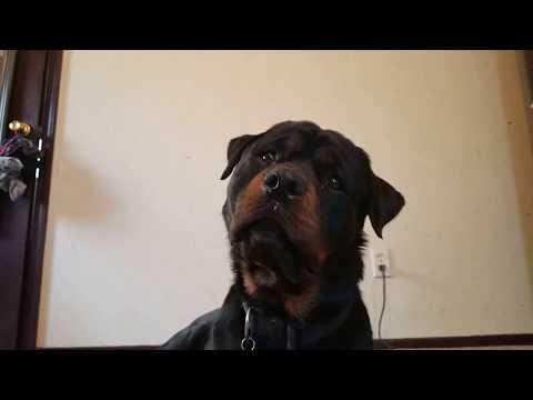 Video MACHO VLOG 10 ; UPDATE ON DOG PARK download in MP3, 3GP, MP4, WEBM, AVI, FLV January 2017