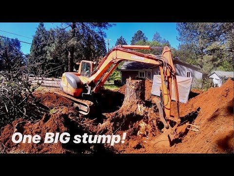 DIGGING OUT A HUGE PINE STUMP WITH KUBOTA KX080-3 (3+foot stump)