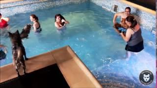 Concours : C'est la fête au Dog Pool!