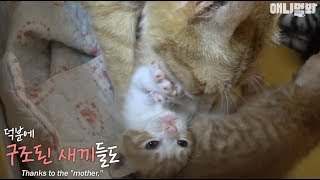 Video There is no 'living creature' which is ditchable for any reason. MP3, 3GP, MP4, WEBM, AVI, FLV Agustus 2018