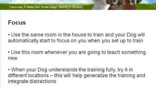 The Importance Of Poodle Training Location