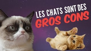 Video 9 preuves que les chats sont des GROS CONS (qui nous veulent du mal) MP3, 3GP, MP4, WEBM, AVI, FLV Oktober 2017