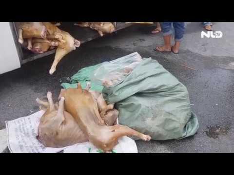 Bắt quả tang xe khách chở 12 con dê không đảm bảo vệ sinh | NLĐTV - Thời lượng: 69 giây.
