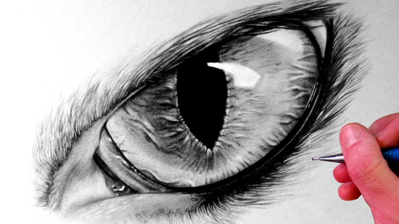 How To Draw A Cat Eye #howtodrawacateye #howto How To Draw A Cat Hd