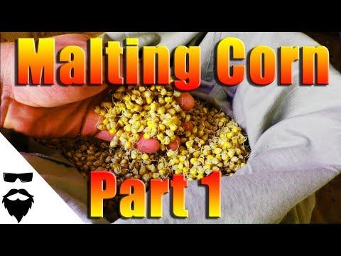 HOW TO MALT CORN FOR MOONSHINE & BEER - EASY! Part 1