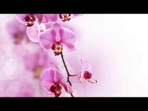 musique - https://itunes.apple.com/us/album/time-to-relax-healing-music/id598490985?l=it&ls=1 www.meditationrelaxclub.com Sérénité: Harmonie et Bien-etre, Musique Zen,...