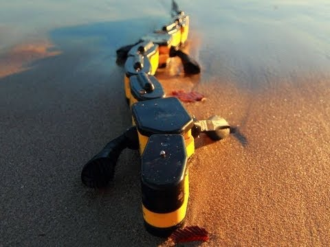 Salamandra Robotica Walking and Swimming