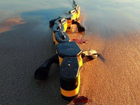 Salamandra Robotica Walking and Swimming