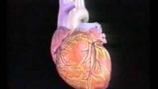 الاسعافات الأولية لنوبات القلب