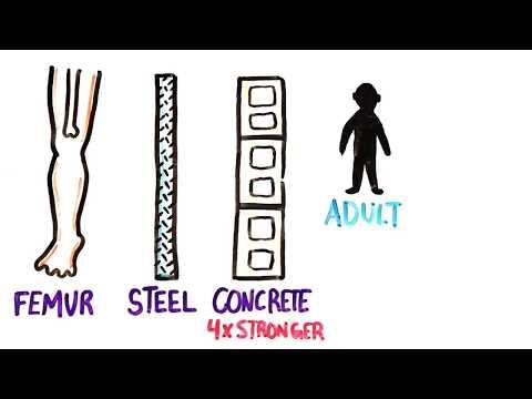 Your Body Is Amazing Pt. 2 (видео)
