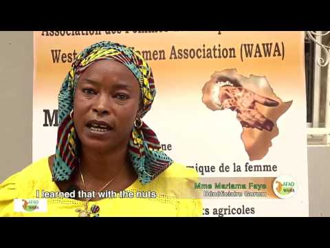 Projet «Capacity Development of Cashew Value Chain Actors in West Africa» avec le soutien du CORAF/WECARD