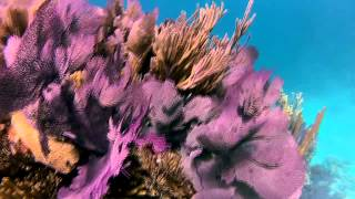 http://www.ncl.com/excursions/search?Ntt=WRF23 Cruise along Bermuda's west end shoreline toward an unforgettable...