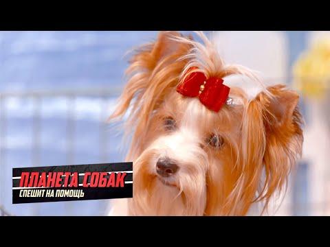 Москва собачья. Планета собак спешит на помощь
