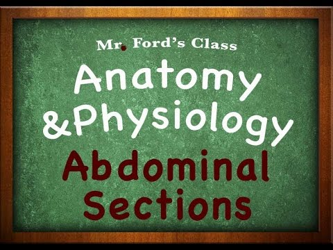 Introduction To Anatomy Physiology: Abdominal Sections (01:09)