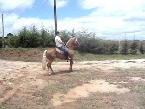 Hobby Loiro da Hulha Negra - Crioulo Chileno I à venda
