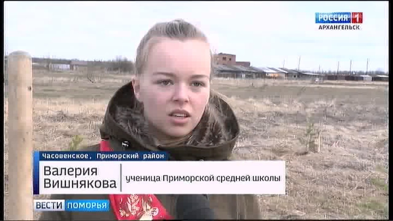 В Приморском районе в появление Парка примирения высадили 80 сосен   gtrkPomorie