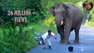 Video Elephant Chasing Due To Foolish Activity. MP3, 3GP, MP4, WEBM, AVI, FLV November 2017