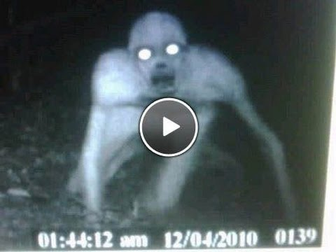 trovata misteriosa creatura aliena (video shock)