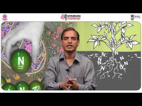 Biosynthesis of Lipids VI