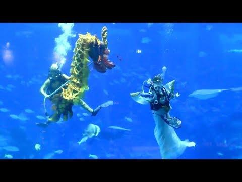 العرب اليوم - عرض راقص تحت الماء احتفالًا برأس السنة القمرية