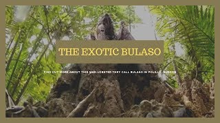 Video The exotic bulaso of Polillo, Quezon | Kapuso Mo, Jessica Soho MP3, 3GP, MP4, WEBM, AVI, FLV Januari 2019