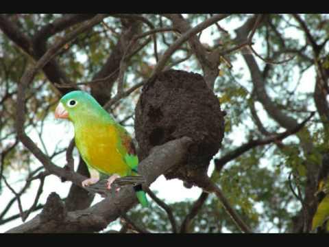 Aves Exóticas Zoológico de Nicaragua  manfut