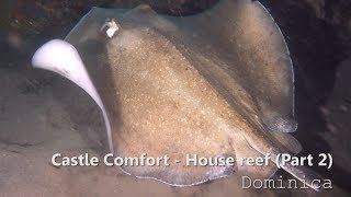 Beautiful and strange underwater creatures filmed during a night dive in Comfort Castle house reef, Roseau Dominica Caribbean...