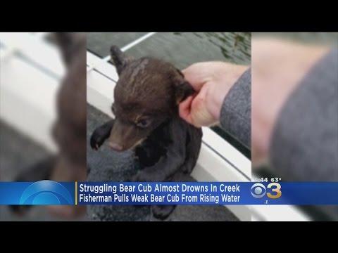 Pa. Fisherman Saves Struggling Bear Cub In Deep Water