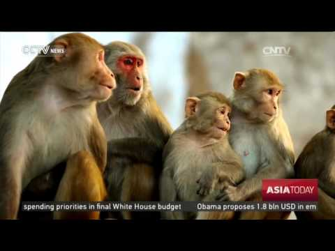Monkeying around in Islamabad's Margalla Hills