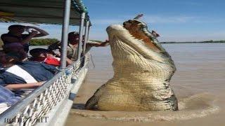 8. Top 5 World's Biggest Crocodiles in the World