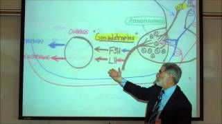 FSH&LH AND THE REGULATION OF THE REPRODUCTIVE ORGANS By Professor Fink