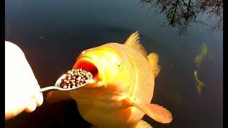 Video Coole Videos #365: 🐠🐟 Fütterung Der Fische / Feeding the Fish || ✪ Stern DuTube MP3, 3GP, MP4, WEBM, AVI, FLV Desember 2018