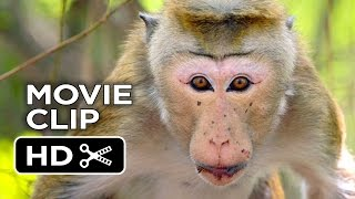 Nonton Monkey Kingdom Movie Clip   Rajah  2015    Disneynature Documentary Hd Film Subtitle Indonesia Streaming Movie Download