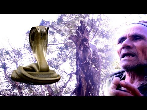 सर्प नाच्ने रुख Snakes Dance On This Tree ||  Powerful Temple In A Village ||   (visiting- 20)