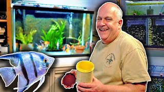 Freshwater Angelfish Care - 50 years of Experience! by Aquarium Co-Op