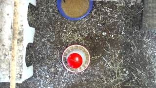 Heramaki coop 2015/07/19 09:00 - 10:00