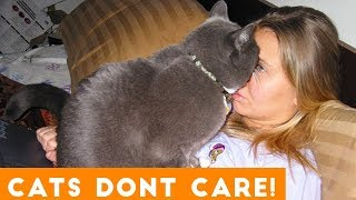 Video Cats Don't Care Funny Pets Videos | Best Funny Cat Videos Ever MP3, 3GP, MP4, WEBM, AVI, FLV Agustus 2018