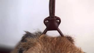 Výstava - úprava psa