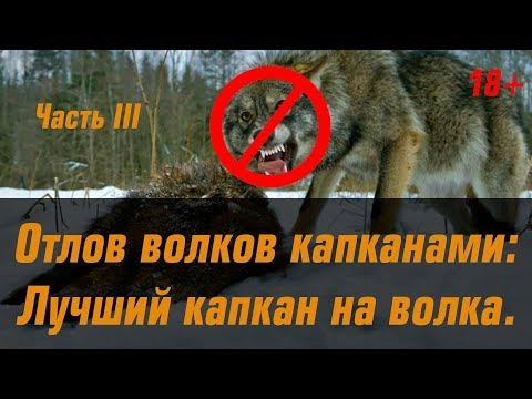 видеообзор, отзывы, описание Капкан на волка Bridger 5OS, офсетный, разр. для отлова волков в РФ